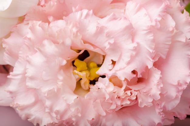 Schließen sie oben von der chrysanthemenblume