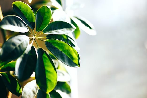 Schließen sie oben von der grünen zimmerpflanze auf wand. minimalistischer innendekor