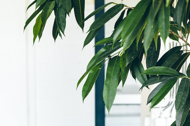 Schließen sie oben von der grünen zimmerpflanze auf weißer wand, innendekoration