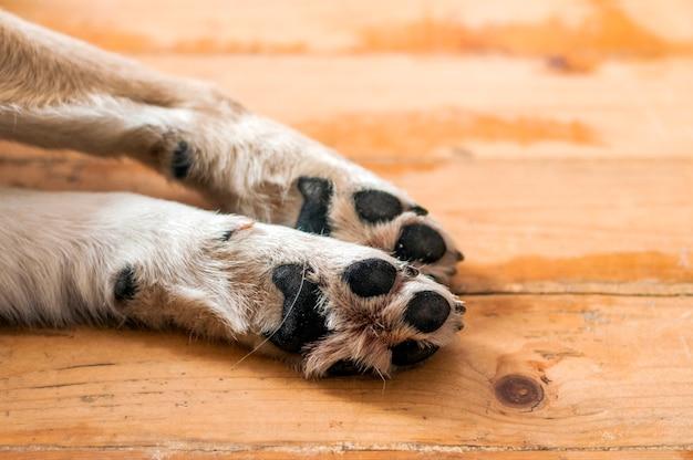 Schließen sie oben von der hellen farbigen welpen-tatze. hund füße und beine auf holz. close up bild einer pfote von obdachlosen hund. hautbeschaffenheit
