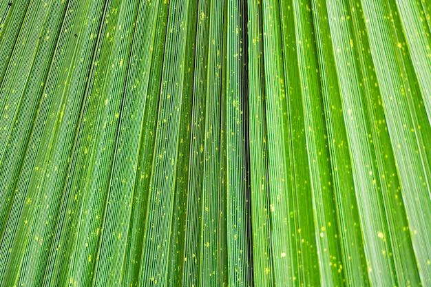Schließen sie oben von der klaren tropischen grünen blatt-beschaffenheit.