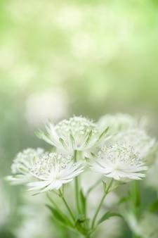 Schließen sie oben von der mini weißen und grünen blume des netten und der schönheit auf unscharfem grün