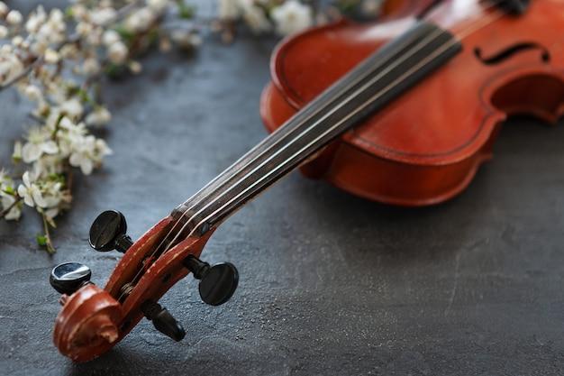 Schließen sie oben von der niederlassung der blühenden kirsche und der violine auf grauem hintergrund
