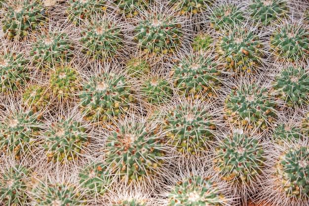 Schließen sie oben von der riesigen ansammlung von kakteen in einem botanischen garten, naturkonzept