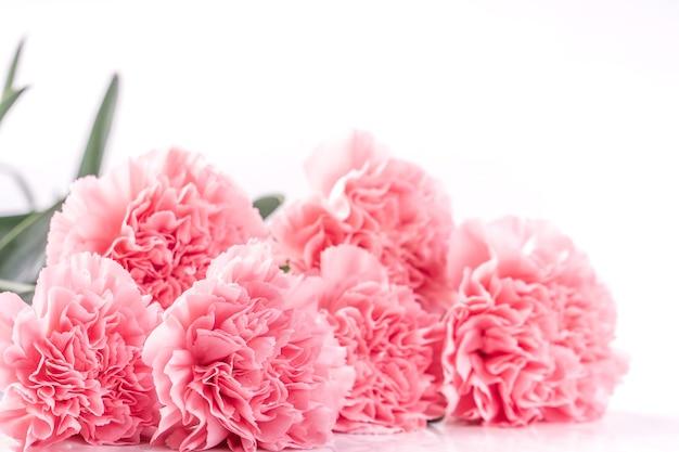 Schließen sie oben von der rosa nelke auf weißem hintergrund für muttertagsblume