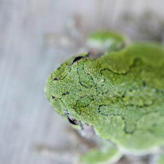 Schließen sie oben von einem grünen frosch am see des holzes, ontario