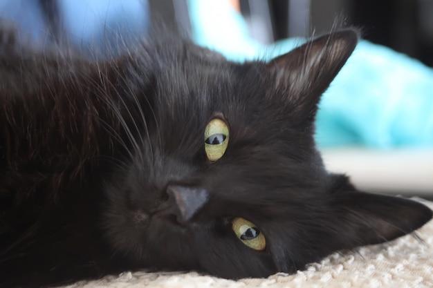 Schließen sie oben von einer schwarzen katze, die kamera betrachtet