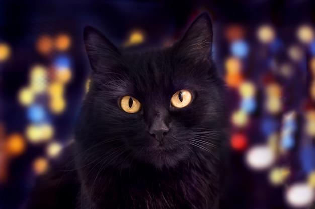 Schließen sie oben von einer schwarzen katze, die kamera und bokeh auf dem hintergrund betrachtet