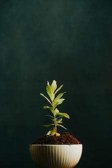 Schließen sie oben von einer wachsenden pflanze in einem put mit einem dunklen hintergrund und kopierraum, studioaufnahme