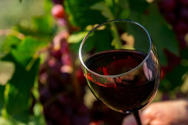 Schließen sie oben von glas mit rotwein neben trauben im weinberg