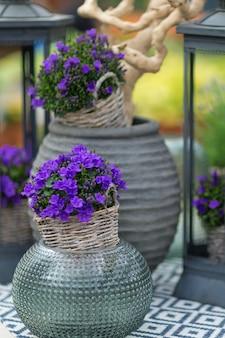 Schließen sie oben von kleinen glockenblumen, die campanula genannt werden, in einem blumentopf auf dem tisch mit dekorativen elementen im hintergrund. selektiver fokus.