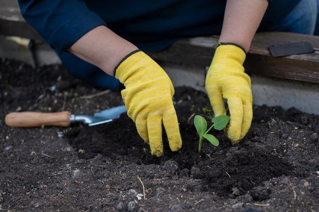Schließen sie oben weibliche hände in gelben handschuhen, die kleine pflanze pflanzen, die im garten arbeiten
