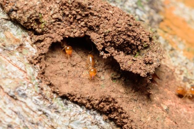 Schließen sie termiten auf holz und erde