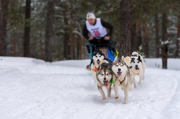 Schlittenhunderennen. husky schlittenhundeteam zieht einen schlitten mit hundefahrer. winterwettbewerb.