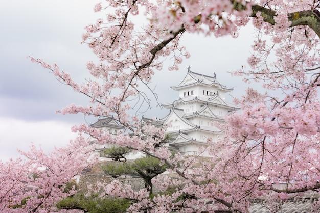 Schloss japans himeji, weißes reiher-schloss in der schönen kirschblüte-kirschblütenjahreszeit