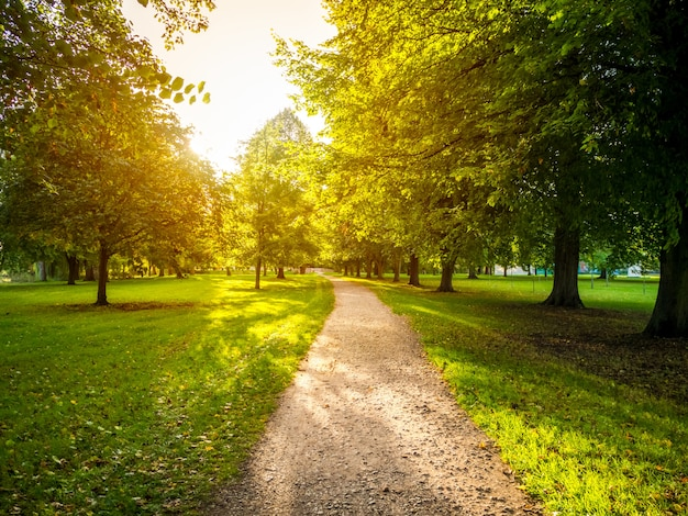 Schmale straße in einem grünen grasfeld, umgeben von grünen bäumen mit der hellen sonne im hintergrund