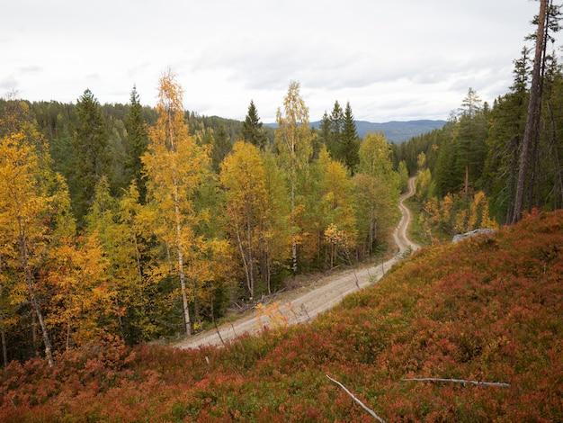 Schmale straße, umgeben von schönen herbstlichen bäumen in norwegen
