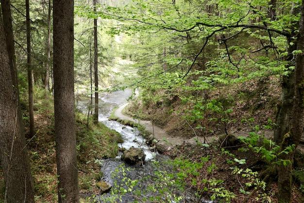 Schmaler fluss in einem wald, umgeben von schönen grünen bäumen