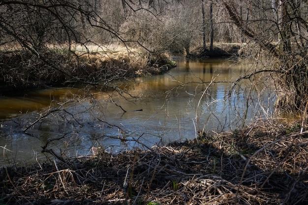 Schmaler flussstrom mit bäumen, die die szene überwachsen