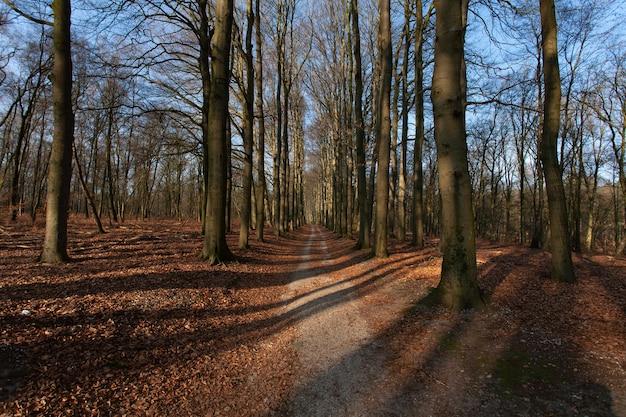 Schmaler weg inmitten hoher blattloser bäume unter blauem himmel