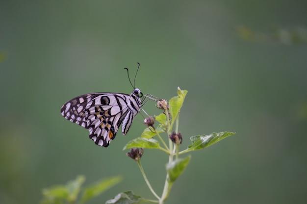 Schmetterling an der pflanze