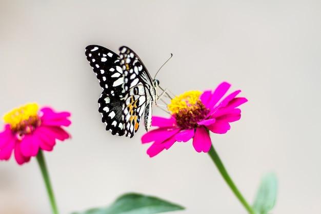 Schmetterling auf blume und unscharfem hintergrund