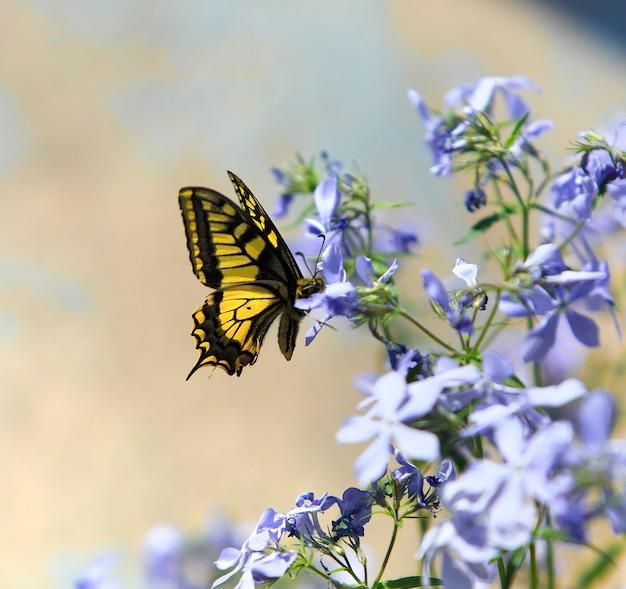 Schmetterling auf blumen in einem garten