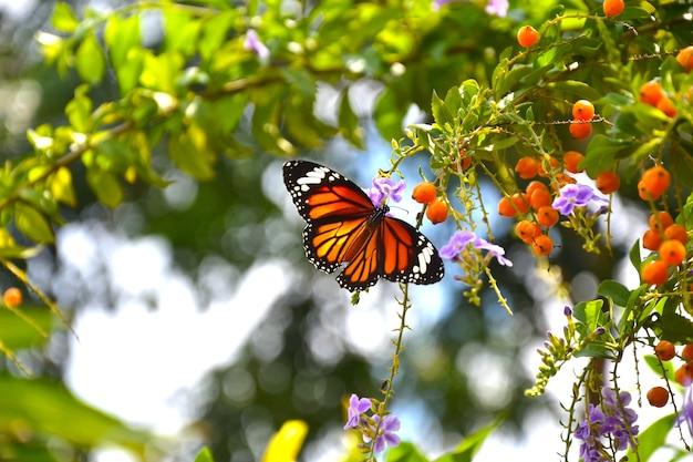 Schmetterling auf den blumen