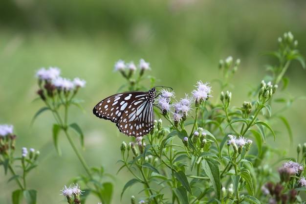 Schmetterling auf der blütenpflanze