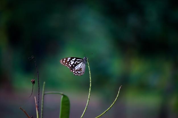 Schmetterling auf der blume pflanze