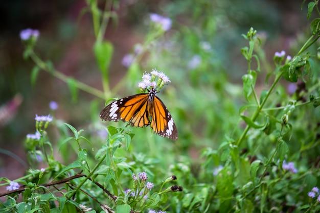 Schmetterling auf der blumenanlage