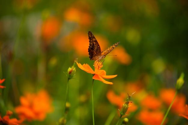 Schmetterling auf einem gelben blumenhintergrund