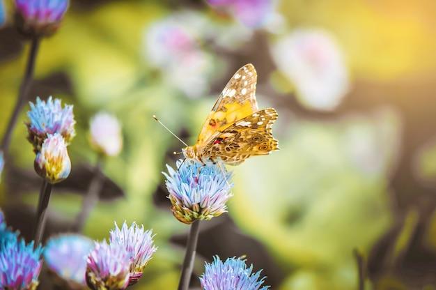 Schmetterling auf einer blume. selektiver fokus natur.