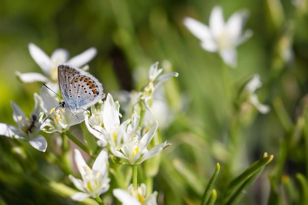 Schmetterling auf einer blumennahaufnahme, frühlingszusammensetzung