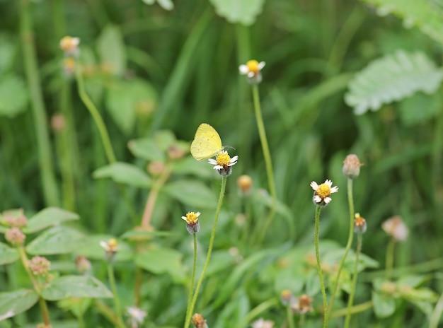 Schmetterling auf einer grasblume