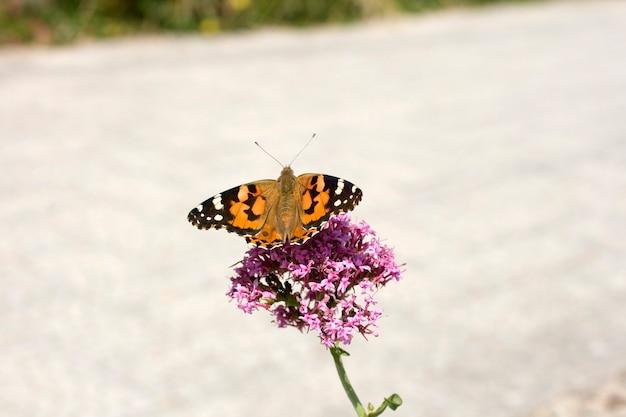 Schmetterling auf einer rosa blume