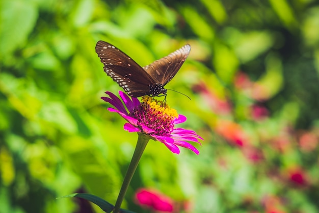 Schmetterling auf einer tropischen blume in einem schmetterlingspark.