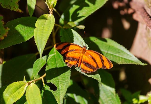 Schmetterling auf frühlingsblumen