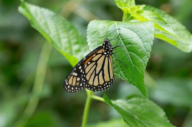 Schmetterling auf urlaub, naturhintergrund