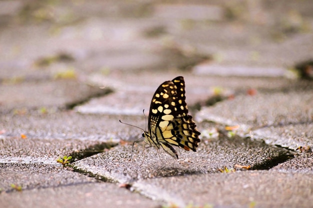 Schmetterling aus den grund
