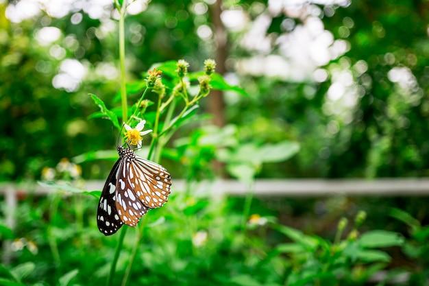 Schmetterling, der auf blume in der gartennatur einzieht