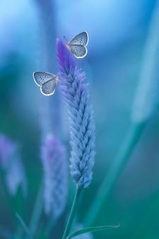 Schmetterling, der auf wilder blume im naturlebensraum, wild lebende tiere sitzt