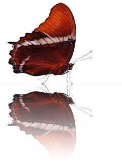 Schmetterling, farben