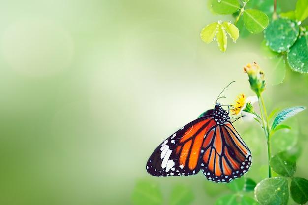 Schmetterling in freier wildbahn