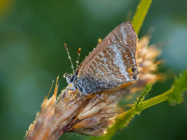 Schmetterling in ihrer natürlichen umgebung fotografiert.