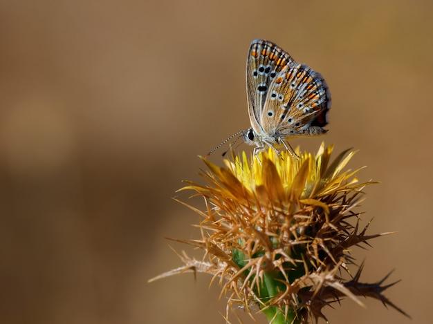 Schmetterling in ihrer natürlichen umgebung.