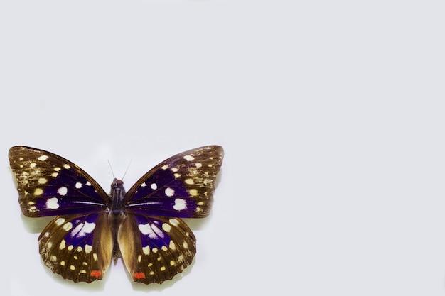 Schmetterling isoliert auf weiß