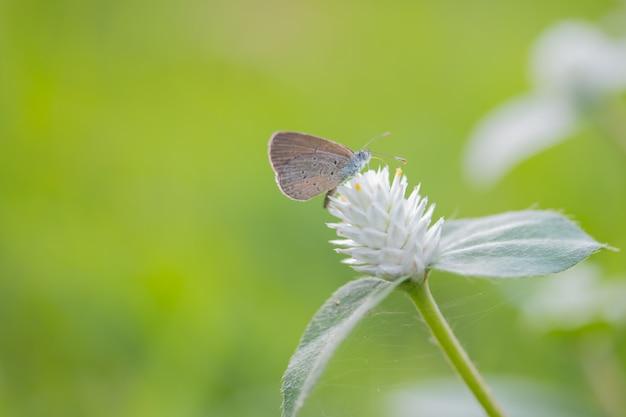 Schmetterling mit weißer blume.