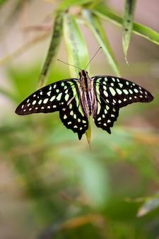 Schmetterling na-blatt in der natur