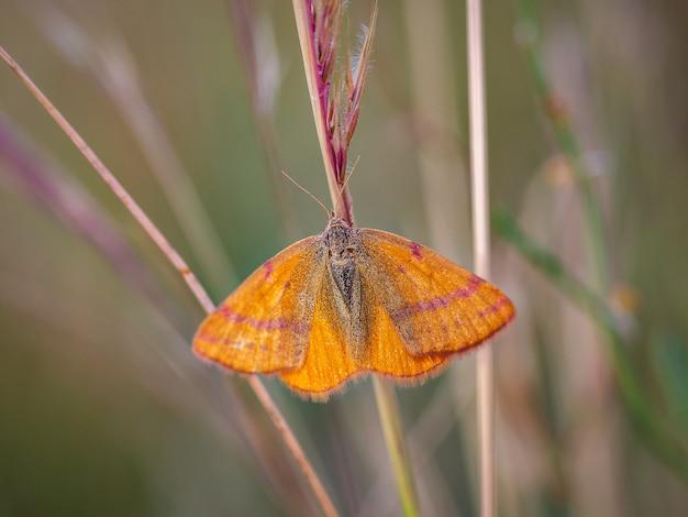 Schmetterling oder motte in seiner natürlichen umwelt